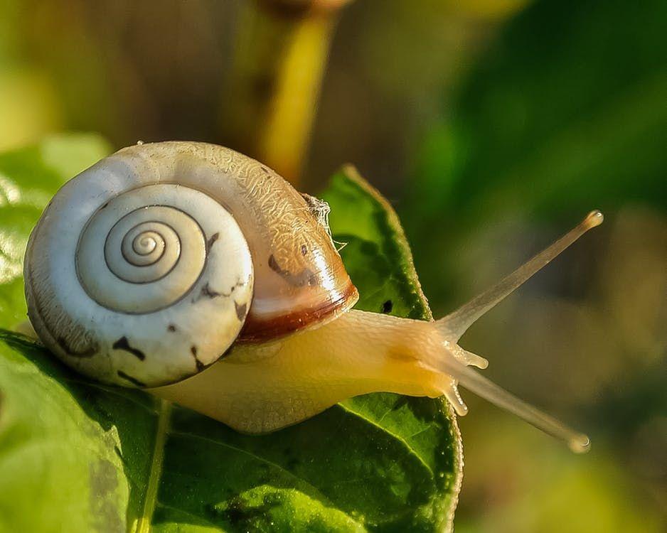 Krem ze śluzu ślimaka – jakie ma właściwości?